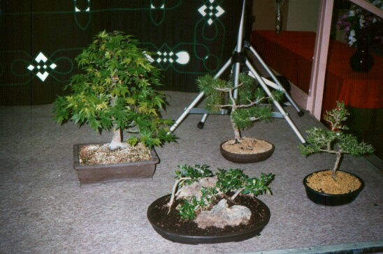 [Close-up of Bonsai]